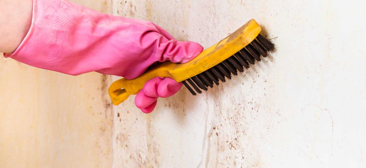 How to stop mold growth in house